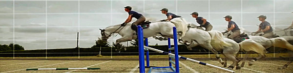 Horse Training Tips Icon