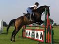 Showjump types - A filler with horse head motifs