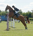 Showjumping - the different show jump types - The Vertical