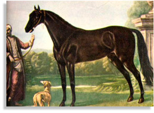 The Byerley Turk - The Thoroughbred Horse