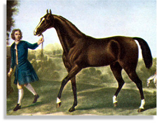 The Darley Arabian - The Thoroughbred Horse