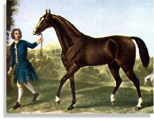 The Darley Arabian - The Thoroughbred Horse