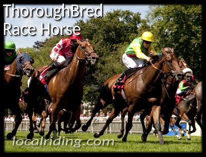 The Modern Thoroughbred Race Horse