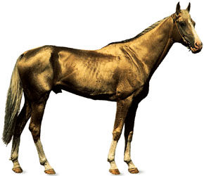 Akhal-Teke Horse Breed Associations