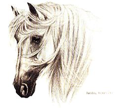 The Andalusian Horse Breed - Head