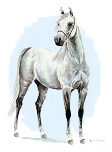 The Arab Horse Breed