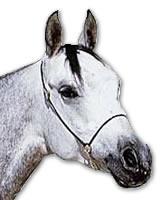 Arab Horse Head - Dished Profile