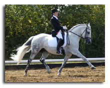 classical dressage and training the dressage horse