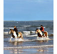 Horse Riding In Ross and Cromarty