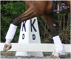 Dressage Boots and Bandages