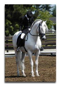 Dressage Riding - the perfect halt