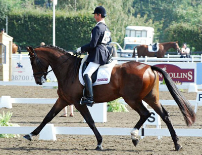 Dressage Horse Nip Tuck