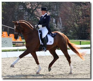 Equestrian Eventing Dressage Tests Phase