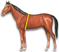 Horse girth Weight