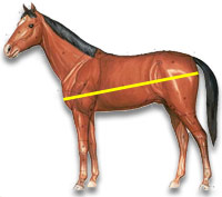 Measure Horse length weight
