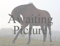 Kent Equestrian Riding Clubs - Wrotham & District Riding Club