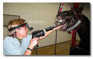 The equine dentist using the power float system