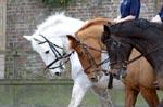 Kent Riding Schools Equestrian Centres In Kent