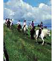 Horse Riding In Kircudbrightshire