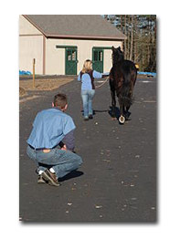 horse health advice - lameness