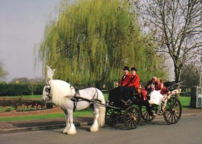 KC Horse Rescue Wedding Carriages
