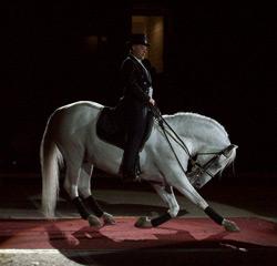 Lipizzaner Horse Bows