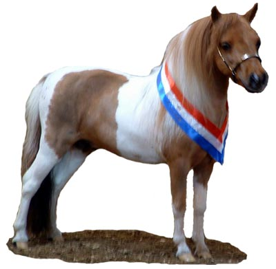 Miniature Horse Breed Associations