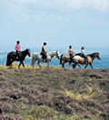 Horse Riding in Pembrokeshire