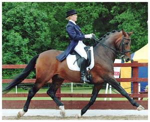 Top Dressage Horse Radar