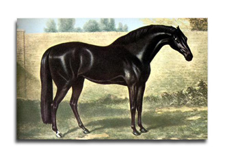 Godolphin Arabian - The Thoroughbred Horse