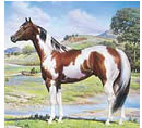 Paint Horse Breed Associations