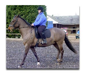 Azoturia Affected Horse