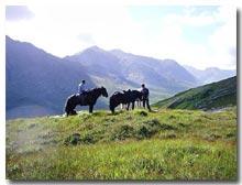 D Bar K. Horse Camp