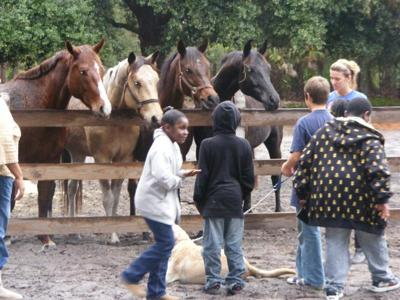 Grace Equine Rescue