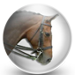 Dressage Bridle Icon