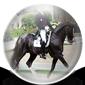 Top Dressage Horses