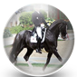 Dressage Horse Icon
