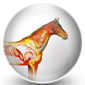Horse Health & Care Icon
