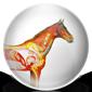 Horse Health Icon