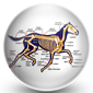 Horse Health and horse conformation