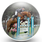 Showjumper Icon