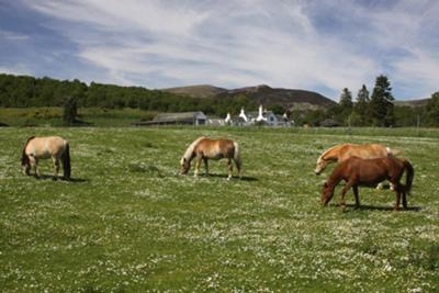 Ponies grazing at Newtonmore Riding Centre