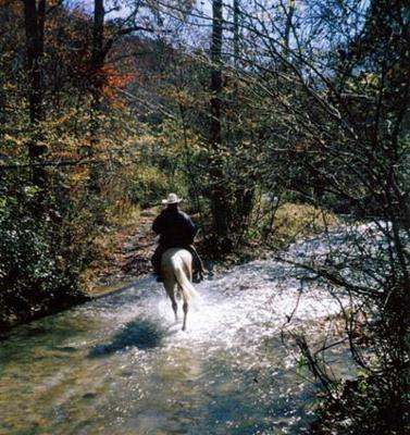 Redhill Horse Camp Trails