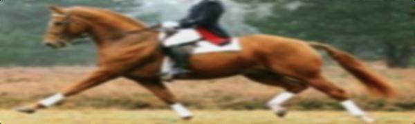 Dressage Horse Weltmeyer - hdr