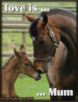 Healthy Mare and Foal - Not Premarin Horses