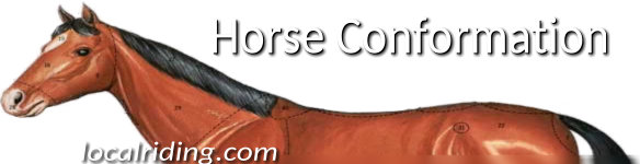 Horse Conforrmation & Points of the Horse