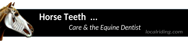 Horse Teeth Care & the Equine Dentist