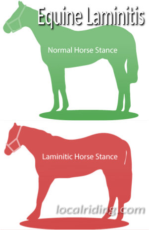Laminitis Symptoms The Tell Tale Signs Local Riding