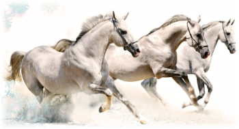 Horses Moving together at speeed