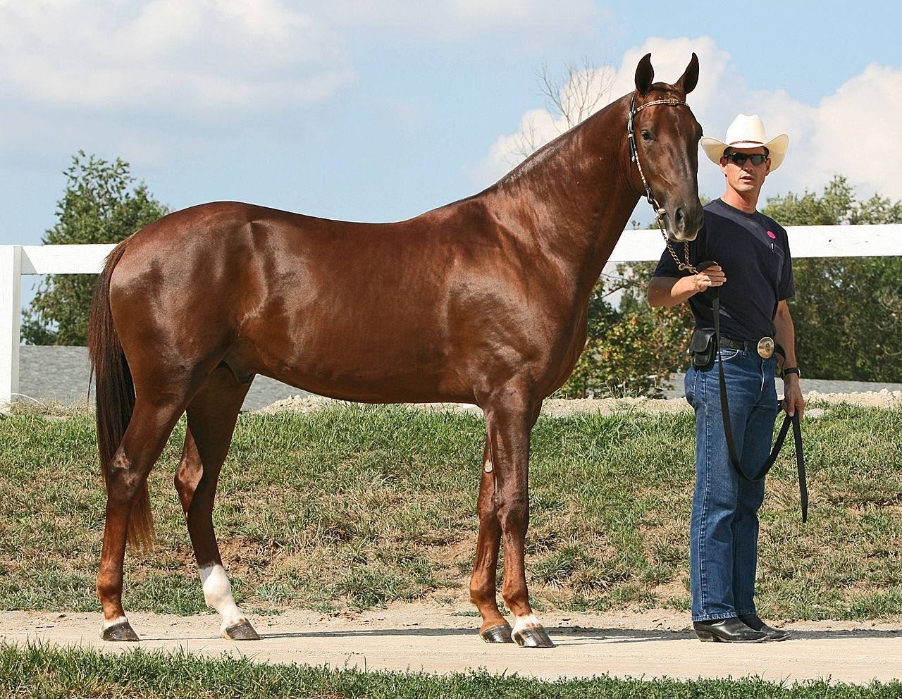 Showing the Akhal-Teke Horse Breed